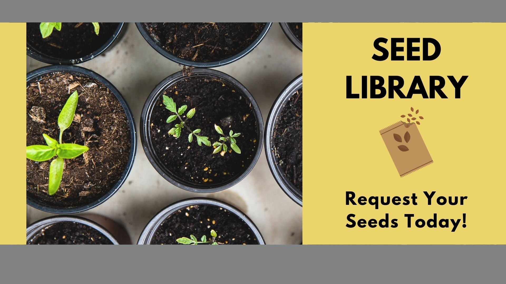 The Chatham Area Public Library Wants to Send You Seeds!